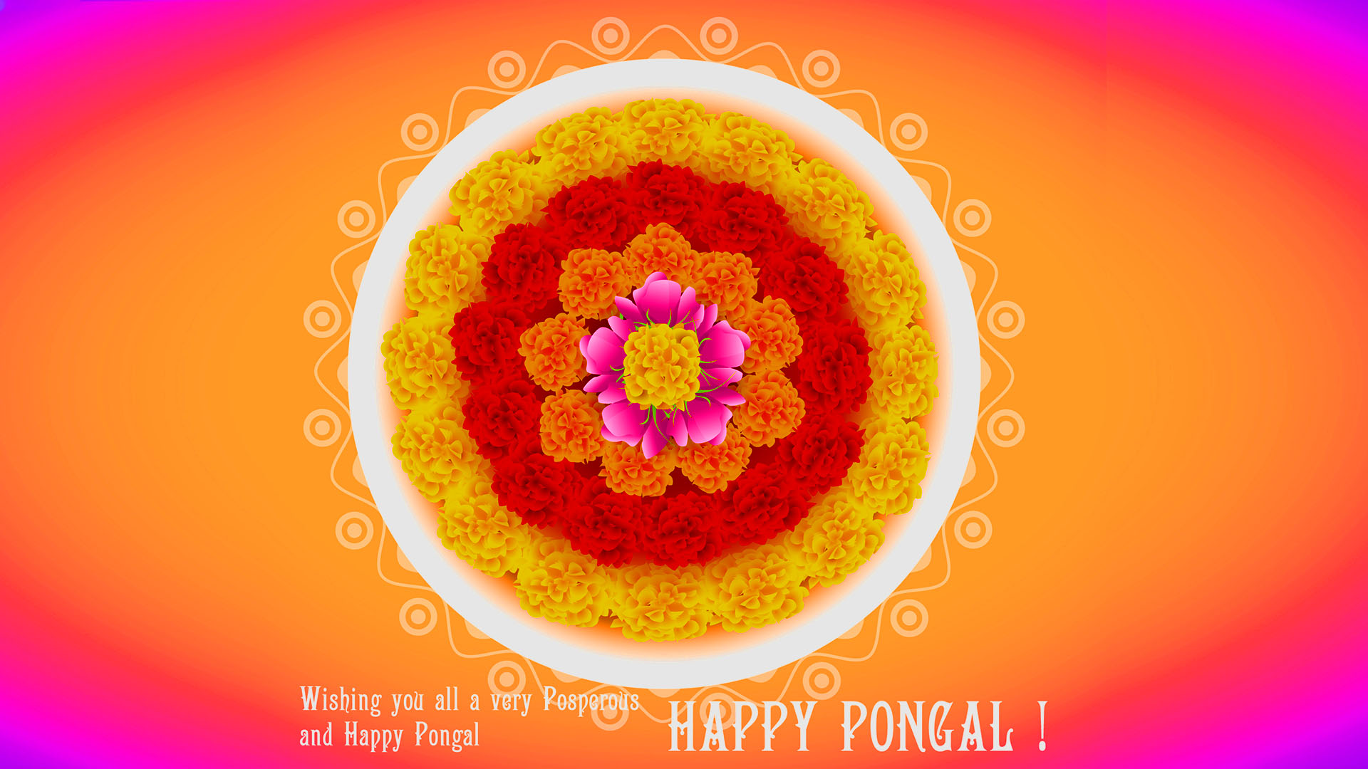 Beautiful Pongal Hd Wallpapers Flowers Cow Rongoli Download 1080p