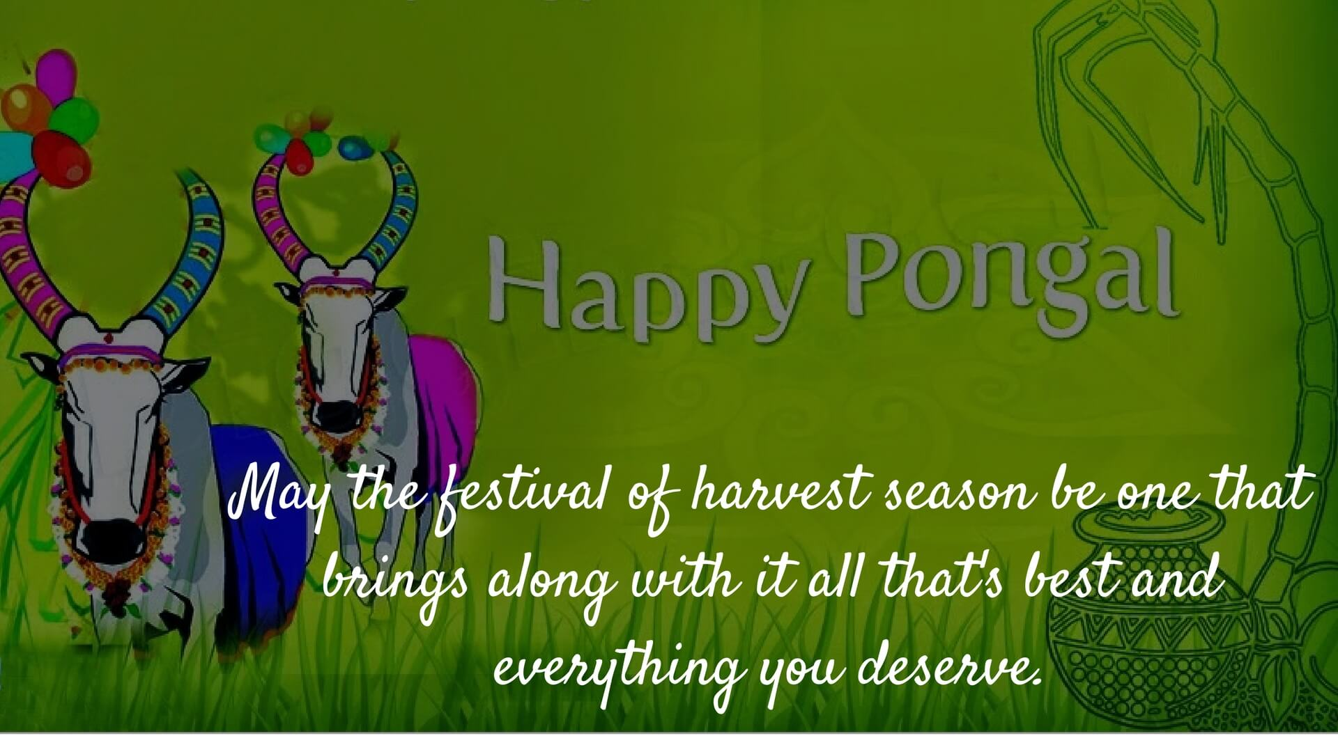 Happy Pongal Hd Wallpaper Wishes In English Hindi Telugu Tamil Malayalam