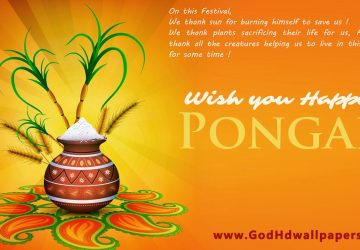 Latest Happy Pongal Wishes Hd Picture Wallpaper 1366×768