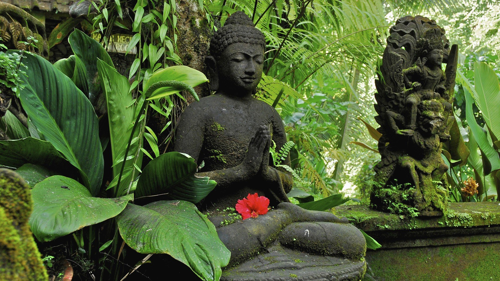 Lord Buddha Pictures Free Download